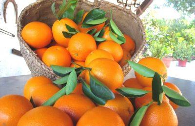cotasa-naranjas-incubadora